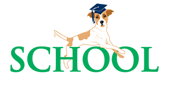 Denver Paw School Training For Your Dog