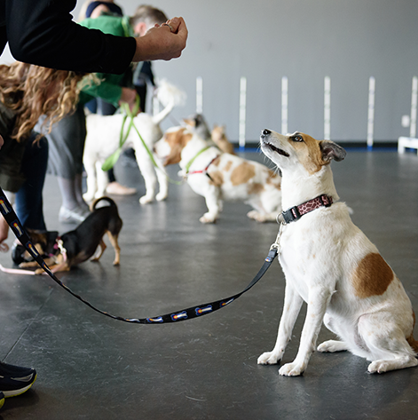 Dog Training Classes Denver Paw School